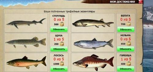 riba-v-zimney-ribalke