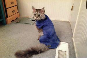 Страница кота Матроскина в Facebook